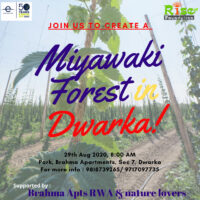 miyawaki-forest-in-delhi